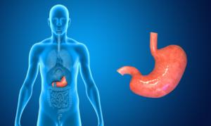 estomac systeme digestif