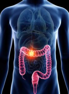 colon systeme digestif
